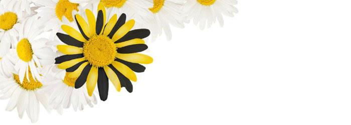 цветок Билайн